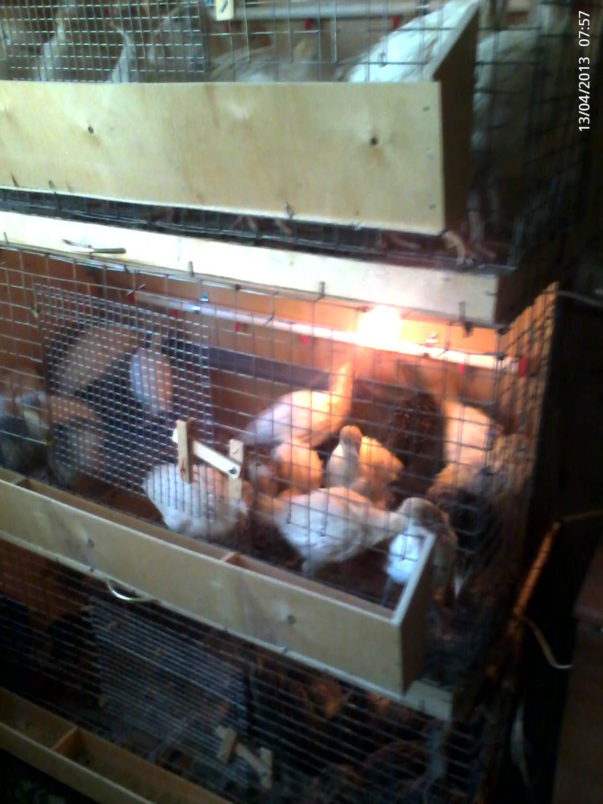 Брудер для цыплят - изготовление своими руками по 33